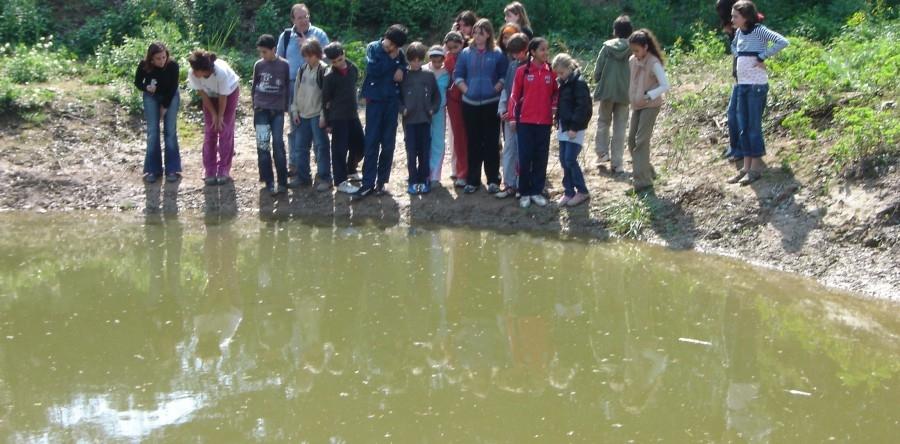 TALLER AMBIENTAL:  L'ecosistema d'un punt d'aigua: els invertebrats