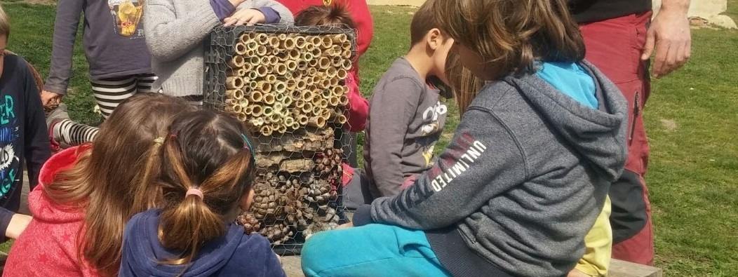 TALLER AMBIENTAL: L'hostal d'insectes i altres inquilins