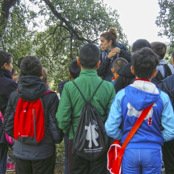 SORTIDA A L'ENTORN: L'ecosistema del bosc mediterrani