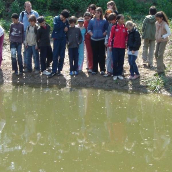 SORTIDA A L'ENTORN:  L'ecosistema d'un punt d'aigua