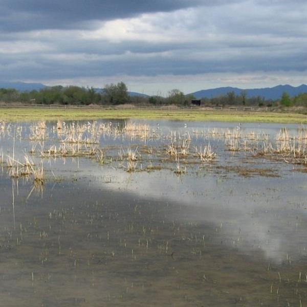 Visita guiada al Parc Natural dels Aiguamolls de l'Empordà