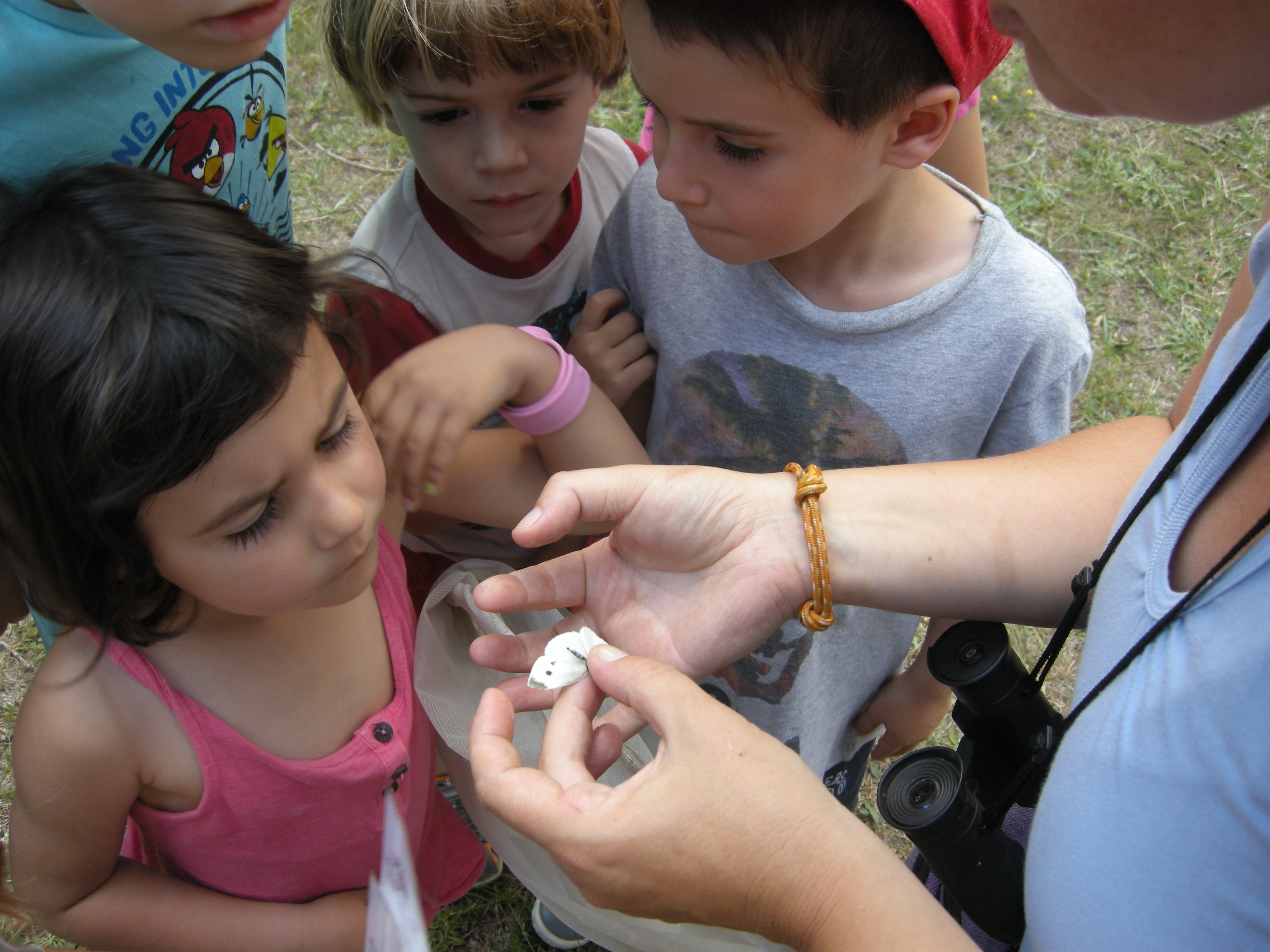 Visita guiada: Les papallones al parc